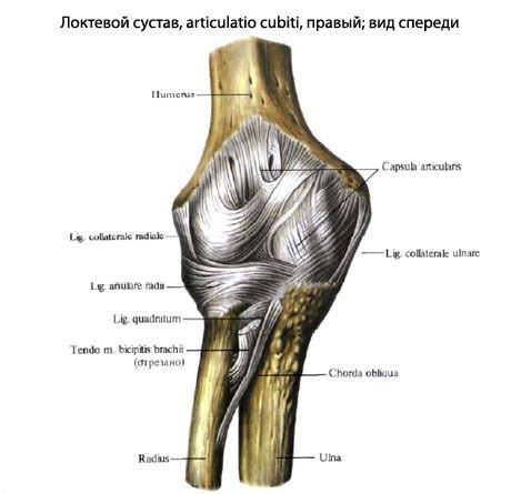 epicondylitis könyökbetegség kezelése