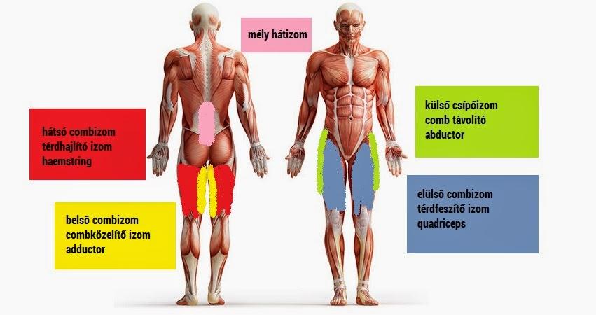 Sportteljesítmény-élettani felmérés - Teljesítménydiagnosztika