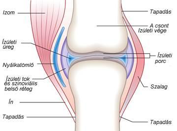 hogyan lehet gyógyítani a térdízület ízületi gyulladását 3 fokkal