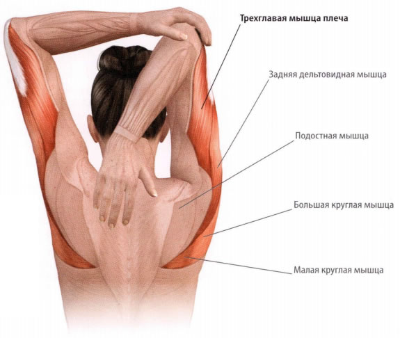 a könyökízület helyreállítása gyulladás után a térdízület kezelésénél a medialis mellék ligamentum károsodása