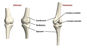 éles térdfájdalom hirtelen alsó hát alsó hasi ízületi fájdalom