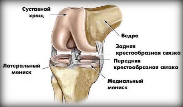 A térd arthroscopy után történő rehabilitáció