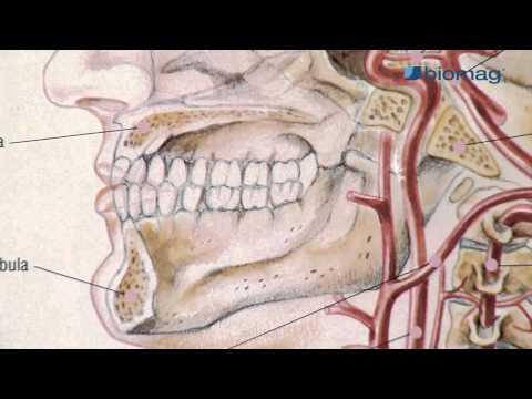 a térd sinusitis kezelése
