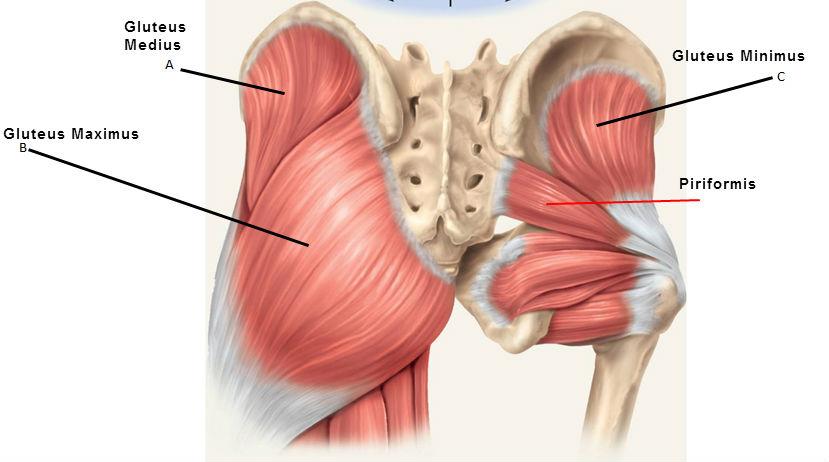 fájdalom a csípőízület kötőelemeiben