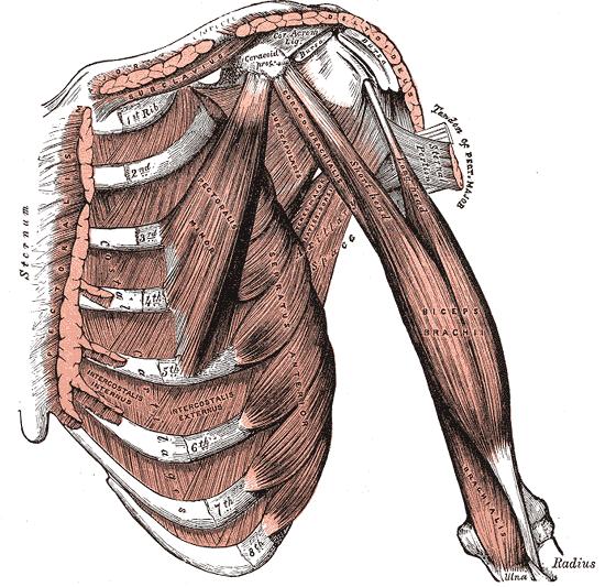 fájdalom a perineum ízületeiben