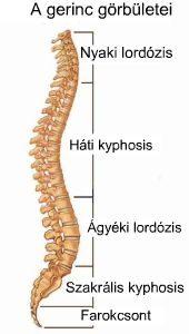 Gerinckoncepció - Fokozott lordózis – csípőhorpasz izom nyújtása