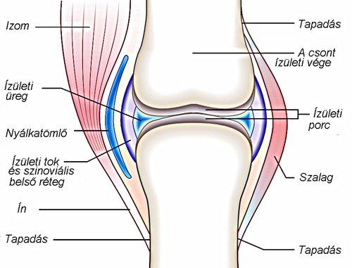 porcszövet helyreállítási folyamat posztraumás artrózis, mint a kezelés
