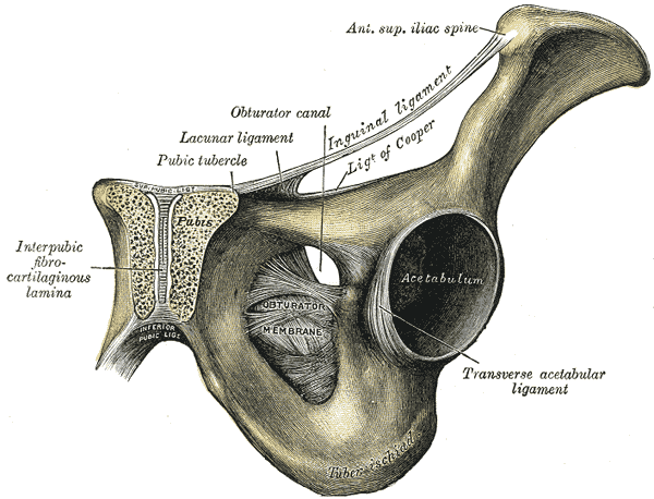Ízületi gyulladás – Wikipédia