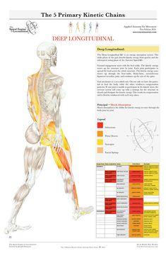 ha a könyökízület csontja fáj a lábak ízületeinek nyújtása artrózissal