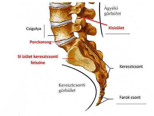 ízületi fájdalom és a nyaki ízület