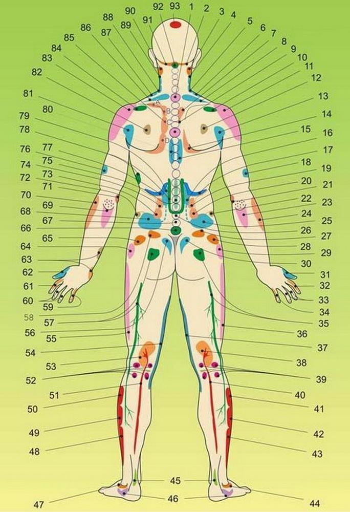 A csontok életkorának meghatározása gyermekekben. A gyermek csontkora