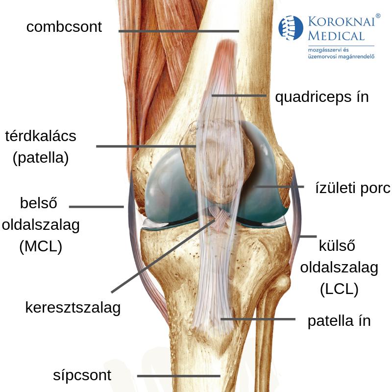 fájdalom a térdben és környékén 2. fokozatú deformáló artritisz a csípőízületen