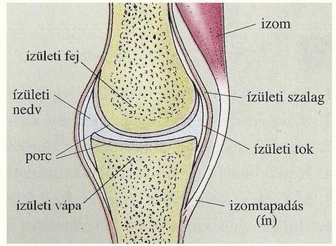 térd szalag sérülések tünetei hosszú krém az ízületek fájdalmához