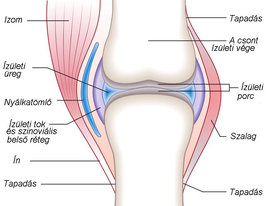 az ujjízület ligamentumainak károsodása