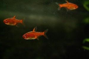Hexamitosis halakban - a betegség okai és kezelési módszerei