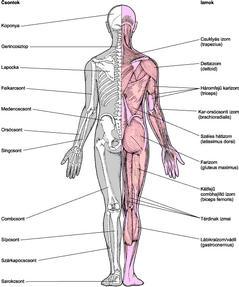 poszt-traumás vállízület osteochondrosis