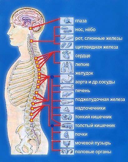 A bordázott ízületek artrózisa: jelek, okok és kezelés - Kezelés