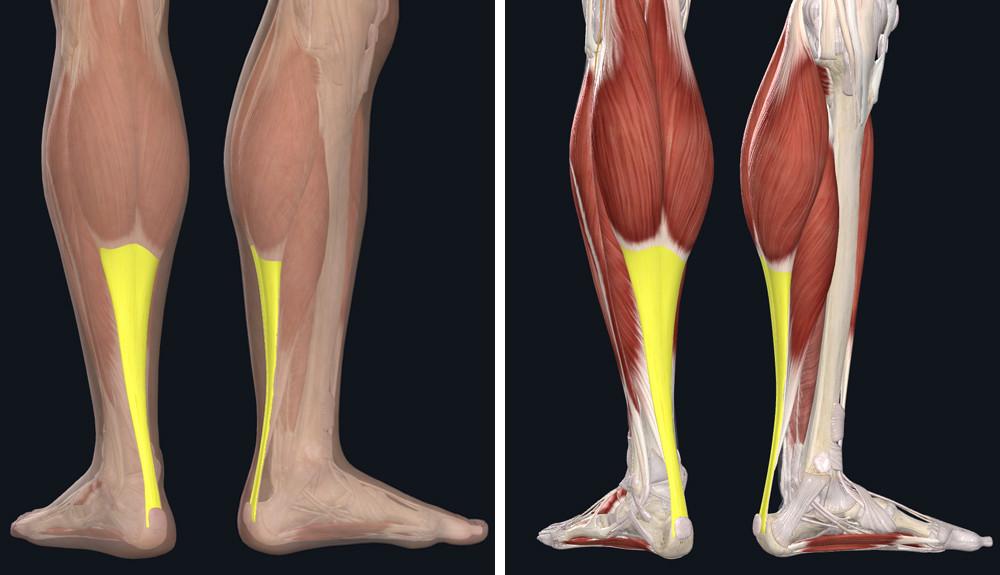 a bokaízület subluxációjának és artrózisának kezelése fájó térdízületek