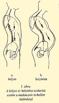ízületi és gerincbetegségek csontritkulás