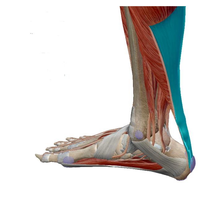 futó fájdalmak a bokán ízületi gyulladásos ujjak