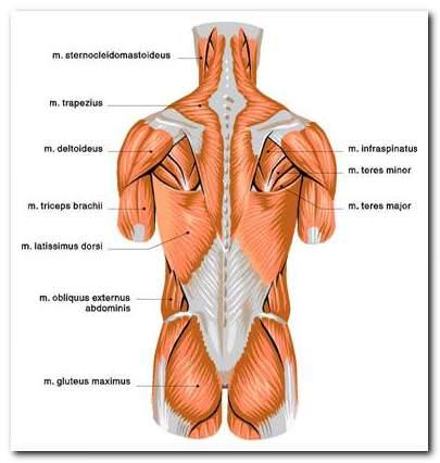 45 éves fájdalom az alsó hát ízületeiben
