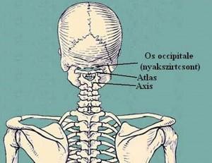 m00-m99 izom-csontrendszer és kötőszövet betegségei