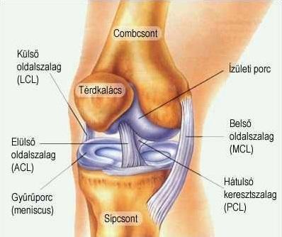 artrózis kezelése sportolókban befolyásolhatja az oszteoporózis az összes ízületet