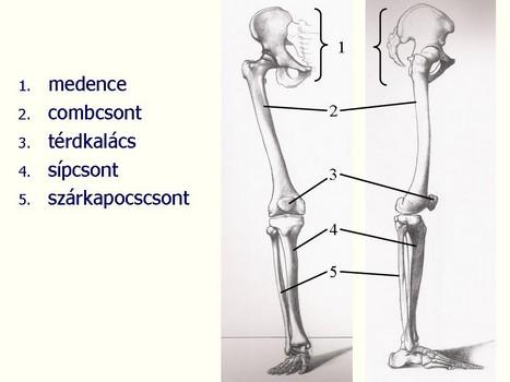 csontok és ízületek zárt és nyitott sérülései