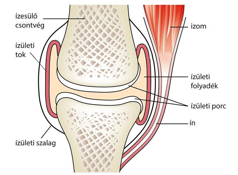 mi a teendő, ha a csuklóízület fáj az ízületek ízületi gyulladásának kezelése 3 fokkal
