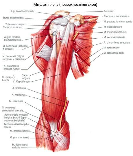 deformáló artrózis a váll és az acromioclavicularis ízületek