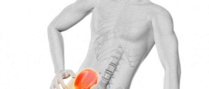 Csípőízületi diszplázia és a hibás táplálás - Hungarovet Tudásbázis