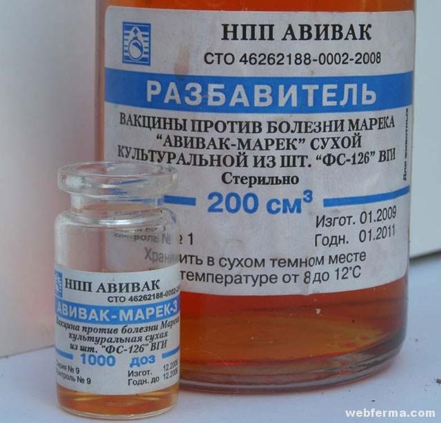 A baromfik fertőző ízületi gyulladása | Kárpátalja