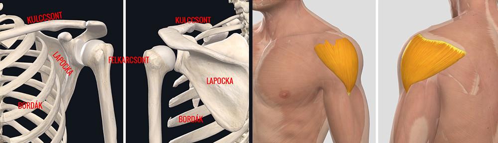 fájdalom a bal vállízület gyakorlatain az acromioclavicularis ízületek ízületi gyulladása