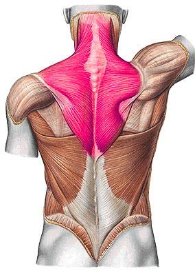 ha a bokaízületnél akut fájdalom jelentkezik akupunktúra a csípőízület artrózisához