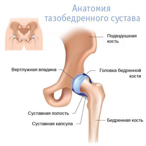 időskorúak csípőjének coxarthrosis-betegsége közös bojtorján