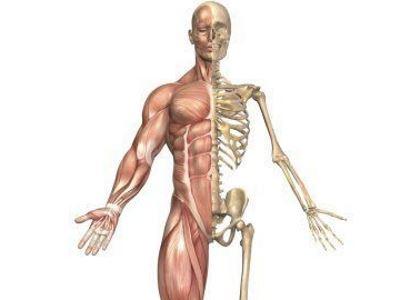 7 gyakori csontbetegség