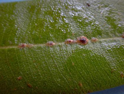fájnak az ízületek az ureaplasma miatt ízületi arthrosis a térd 2 fok