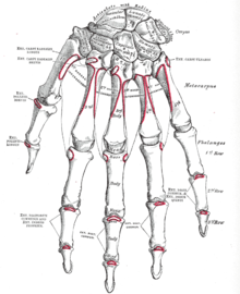 fájdalom ujjízület első phalanx