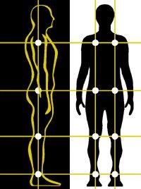 gerincízületi betegség ízület elasztikus készítése