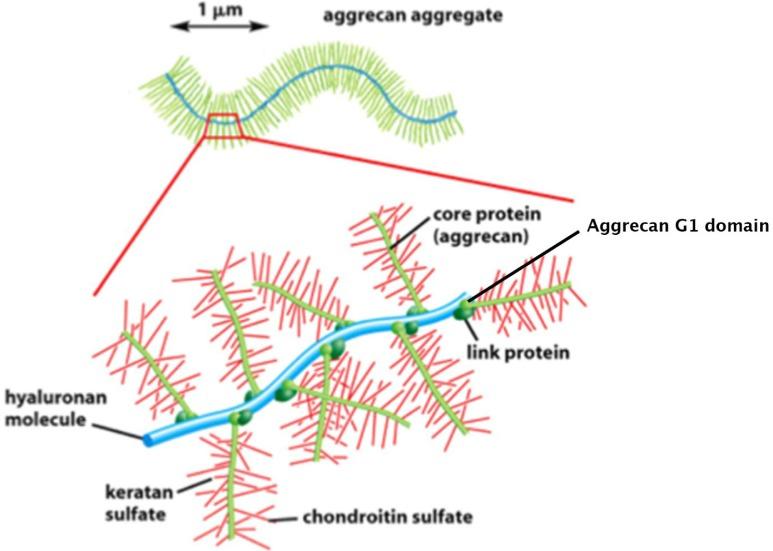 mely kenőcs segít az osteochondrozisban gyógyszerek a könyökízület bursitisére