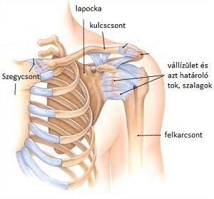 a lábak ízületeinek artrózisa 1 fok miért repednek és fájnak a térd