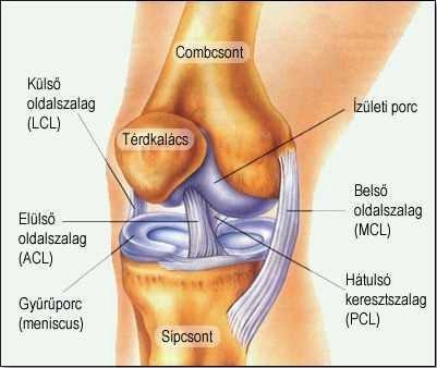 mindkét csípőízület ízületi kezelése terhelés térd artrózisával
