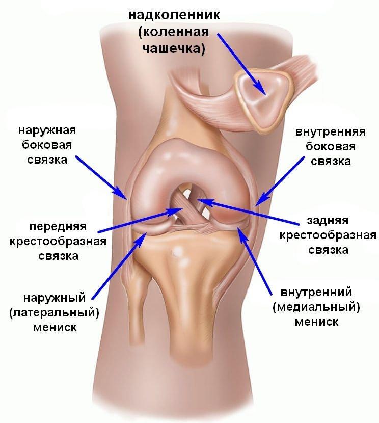 Meniscus a térdízület: tünetek, sérülések kezelése és törése - Köszvény
