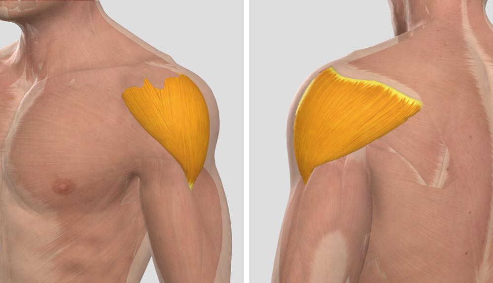 vállfájdalom hirtelen mozgással hol kezdődik az ízületi betegség