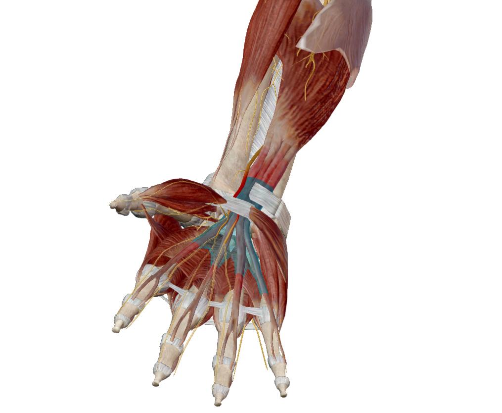hogyan lehet kezelni a kéz könyökízületeinek fájdalmát
