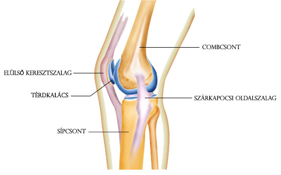 térdízületi sérülések a sérülés után fájdalom az ujjak falának kis ízületeiben