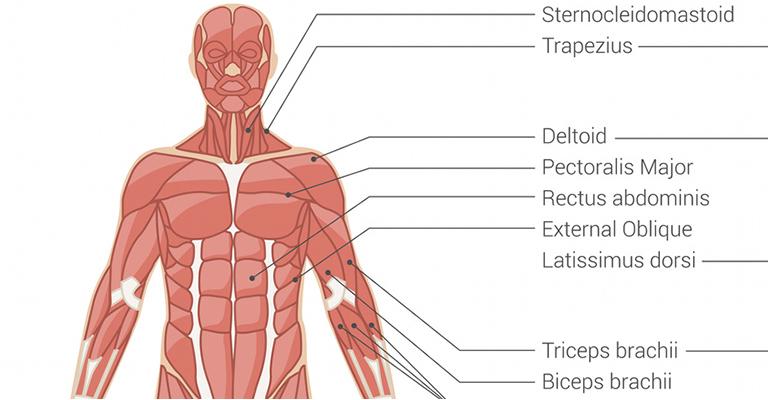Vállfájdalom okai II. – Ízületi kopás és bicepsz ín gyulladás