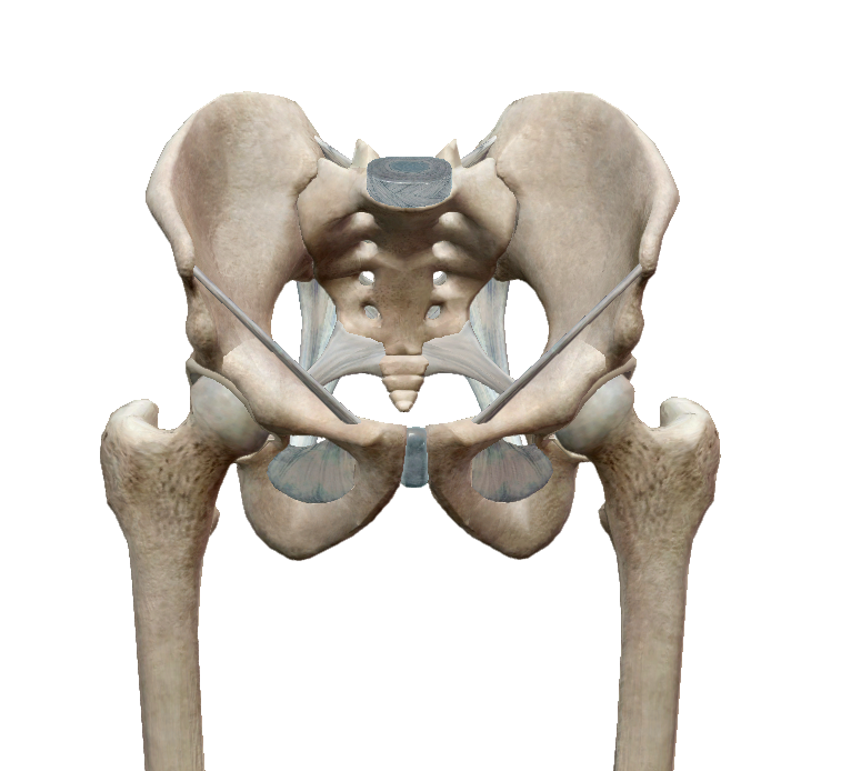 Piriformis szindróma, sugárzó fájdalom a combban, fenékben. | agnisoma.hu