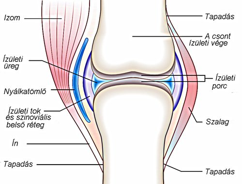 a csípőízületek deformáló ízületi kezelése