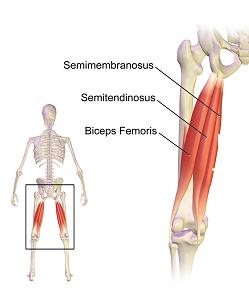 bokaízületek duzzanata és fájdalma ahol kezelni kell az ízületi sérüléseket